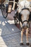 Small pony carrying cart and looking to the camera Royalty Free Stock Image