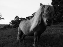 Small Pony in field Stock Images