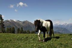 Small pony Stock Photo