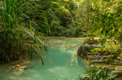 Small pool in jungle Stock Image