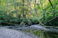 Small pools in washington forest Stock Photography