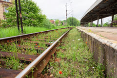 Small poppies on the railroad tracks Royalty Free Stock Photo