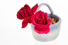 Small pot with beautiful red roses Stock Images