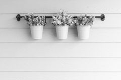 Small pot flower on board wooden wall. Stock Photos
