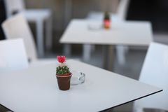A small pot with a flowering cactus. On a table in a small cafe Stock Photos