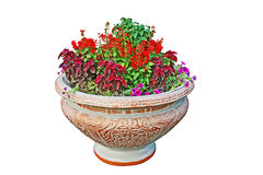 Small pot with flowers Stock Photo