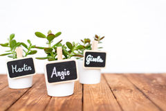 Small pot plants with name signs Stock Image