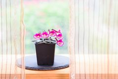 Small potted flowers blooming near window in house stock image