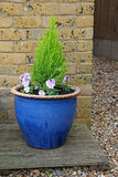 Small potted garden Stock Photo