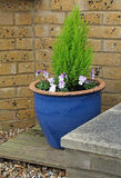 Small potted garden Royalty Free Stock Images