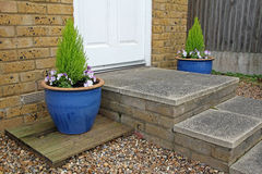 Small potted garden Stock Photography