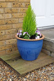 Small potted garden Royalty Free Stock Image