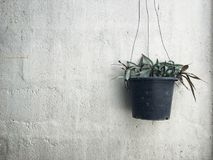 Small potted indoor plants in plastic pot Royalty Free Stock Photography