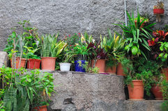 Small potted plants Stock Image