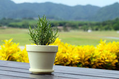 Small potted plants placed on wooden boards Stock Photography