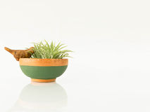 The small potted plants Stock Photography