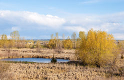 Small Prairie Pond with Reeds Around It Stock Photo