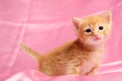 Small pretty kitten Stock Images