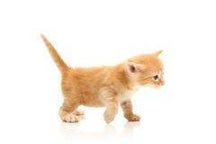 Small pretty kitten Stock Photos