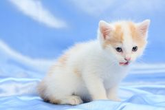Small pretty kitten Stock Photos