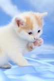 Small pretty kitten Stock Photo
