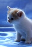 Small pretty kitten Stock Photography