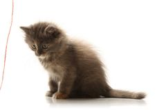 Small pretty kitten Stock Image