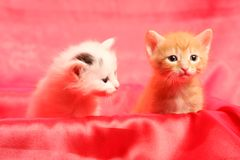Small pretty kittens Royalty Free Stock Image