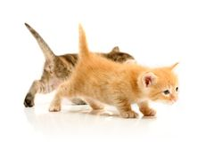 Small pretty kittens Stock Photos
