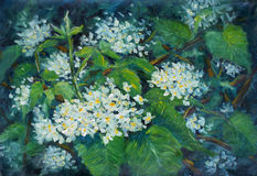 Small pretty white flowers in large green leaves. Floral summer landscape. Original oil painting small pretty white flowers in large green leaves. Floral summer Stock Photography