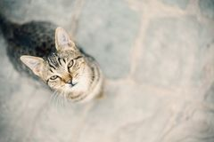 Small prety cat looking up. Close up Royalty Free Stock Images