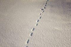 Small prints of wild animal tracks on white snow in winter. A small prints of wild animal tracks on white snow in winter stock photos