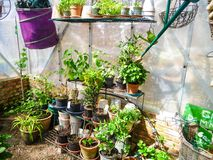 A small private greenhouse used for hibernation stock photo