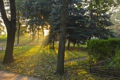 A small public garden at dawn backlight by sun Stock Photos