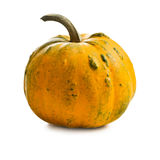 Small pumkin Stock Photography