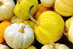Small pumkin, white and yellow pumkin Stock Photos