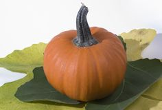 Small pumpkin Stock Image