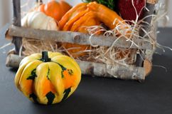 Small pumpkin and a basket with pumpkins on the background Stock Photos