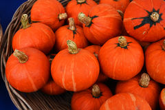 Small pumpkin basket Royalty Free Stock Images
