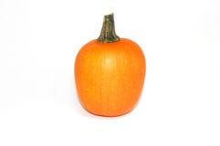 Small Pumpkin royalty free stock image