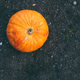 A small pumpkin on the garden ground Stock Image