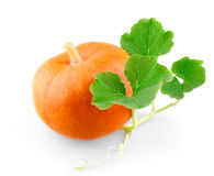 Small pumpkin with leafs. On white background stock photos