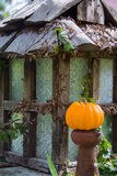 Small pumpkin Royalty Free Stock Images