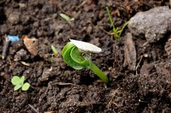Small pumpkin plant stock image
