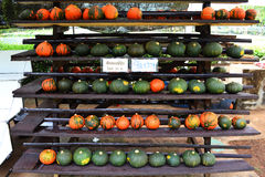 Small pumpkin for sale Royalty Free Stock Photo