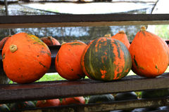 Small pumpkin for sale Stock Image