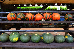Small pumpkin for sale Royalty Free Stock Image