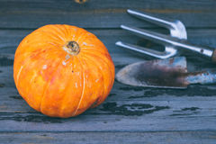 A small pumpkin on a wooden background Stock Image