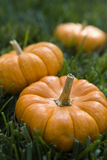 Small Pumpkins Stock Photos