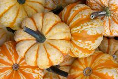 Small Pumpkins. Closeup of ornamental yellow and orange pumpkins royalty free stock photos